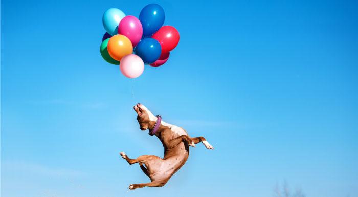 風船でペット(犬)を飛ばして逮捕。インド人YouTuber「GAURAVZONE」